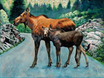 Moose and Calf Algonquin Park
