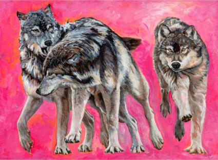 Wolves Running Great Bear Rainforest